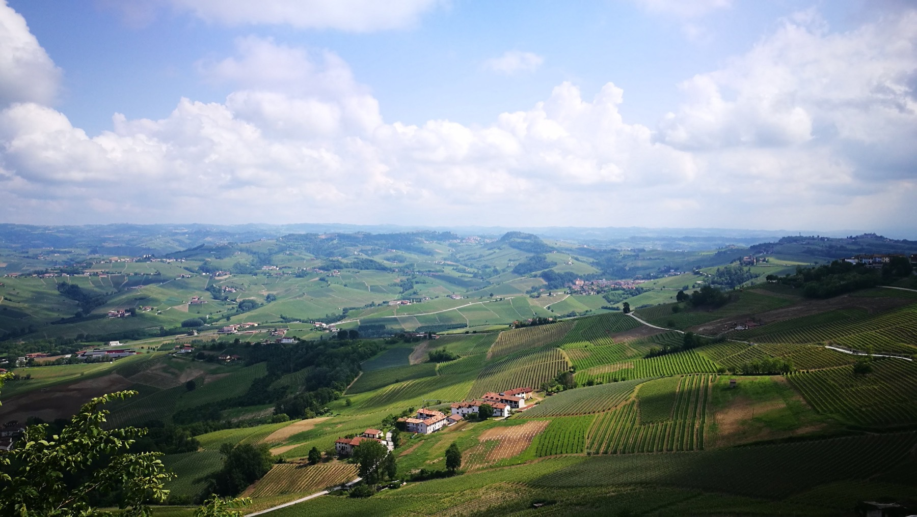 Vineyards in the Langhe